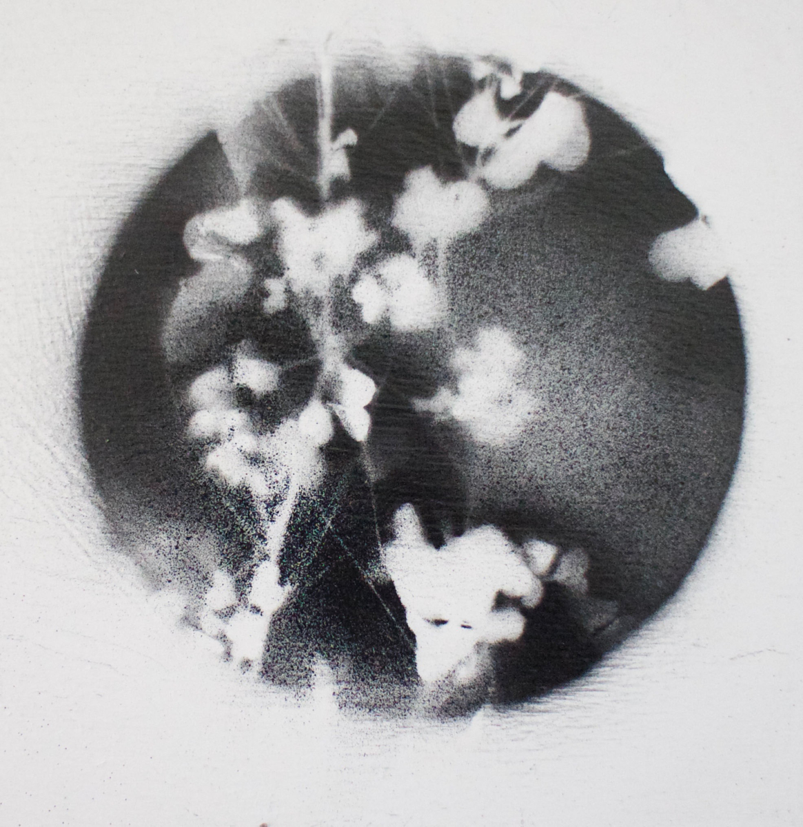 Oxalide, alléluia  no 2, acrylique sur panneau de bois, 4 x 4 po, 2018